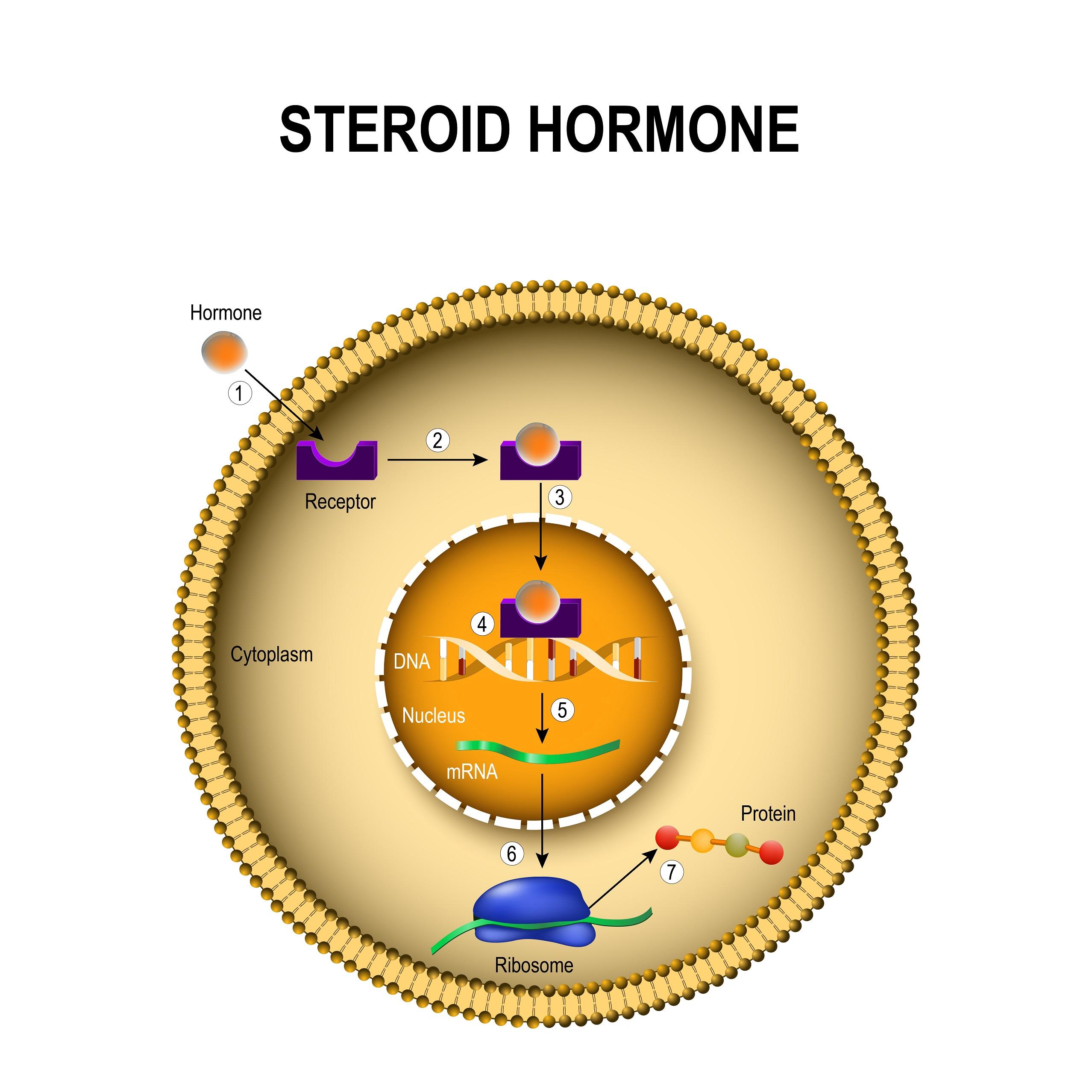 Schemat działania hormonów